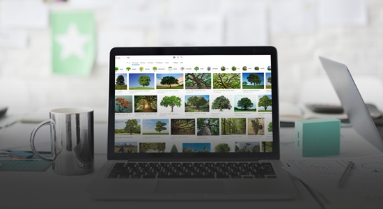 Laptop showing Google Image search of trees